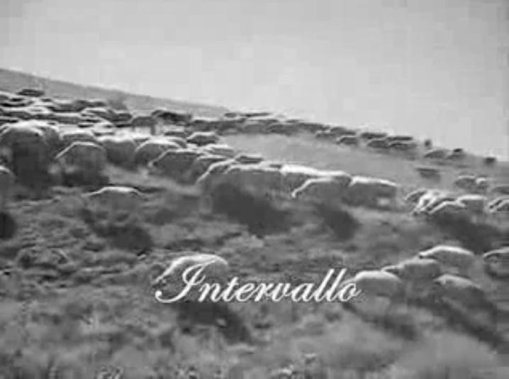 intervallo RAI pecore
